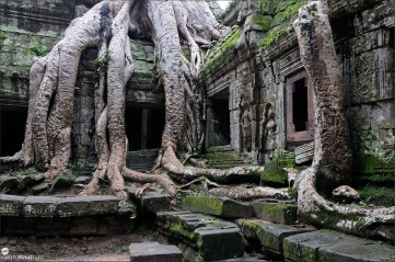 The jungle encroaching on Ta Prohm Temple, Angkor, Cambodia